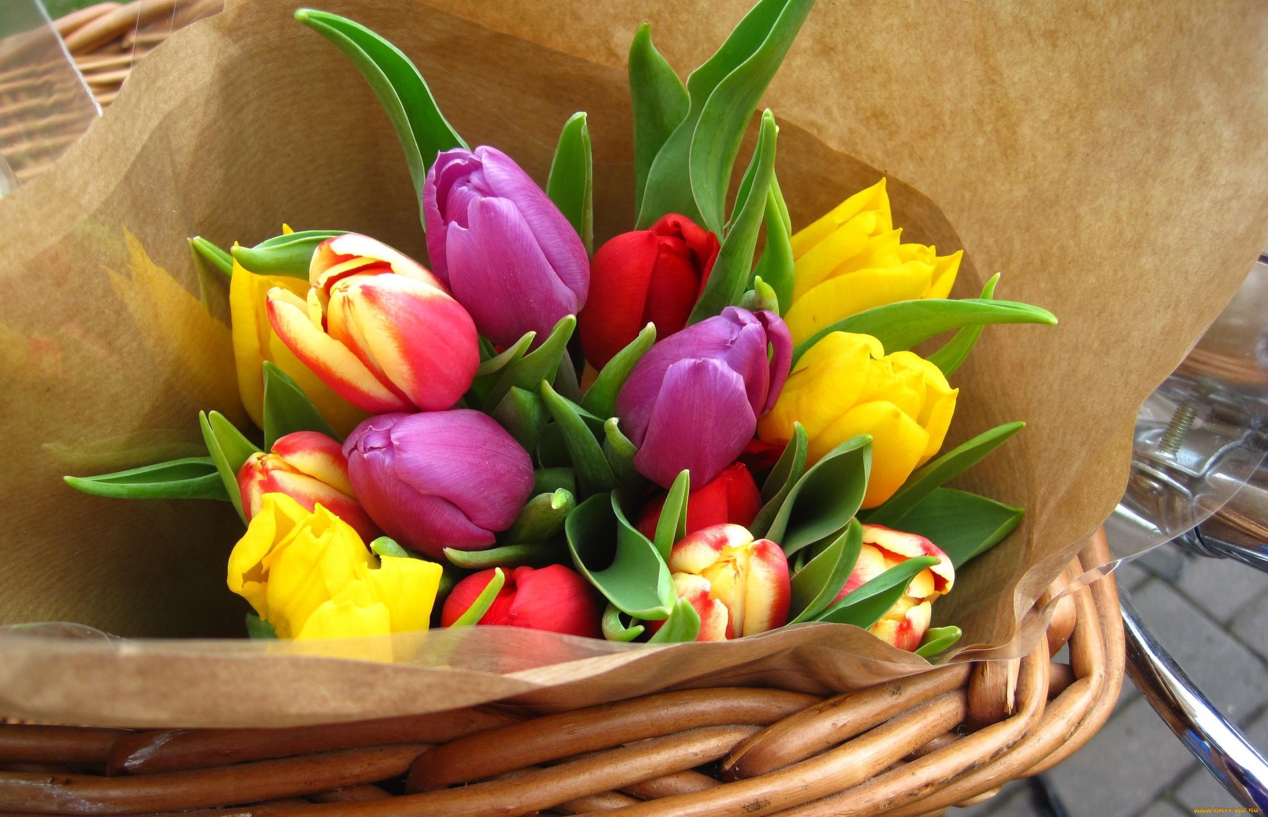 картинки тюльпаны красивые букеты на столе появляются бородавка собаки